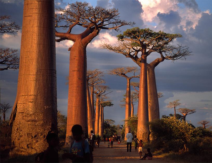 死ぬまでに一度は行きたい世界の絶景:マダガスカルのバオバブ並木道