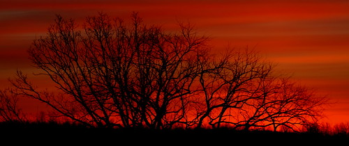 trees red sky orange nature clouds sunrise perfectsunsetssunrisesandskys
