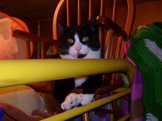 Jasper sitting in a rocking chair