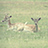 the Deers ♥ group icon