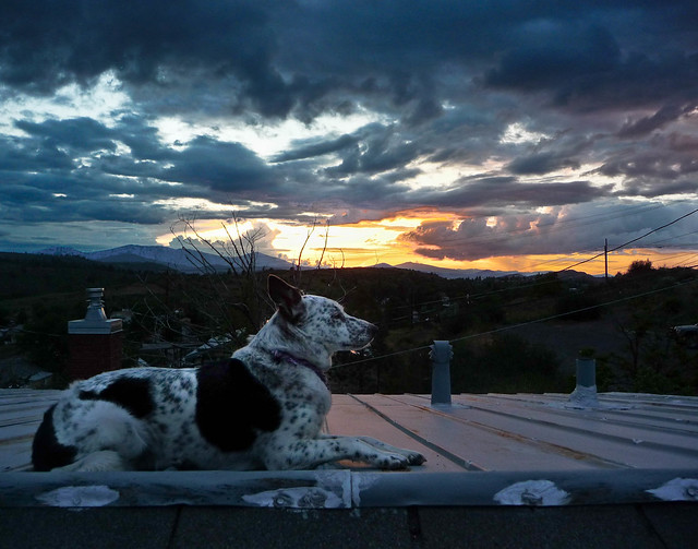 Ringo on the Roof