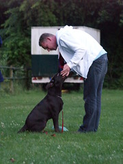 How Dogs Learn, A Guide To Canine Training 2