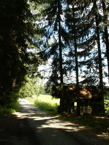 Der wandernde Musikant im Vogtland Wald 331