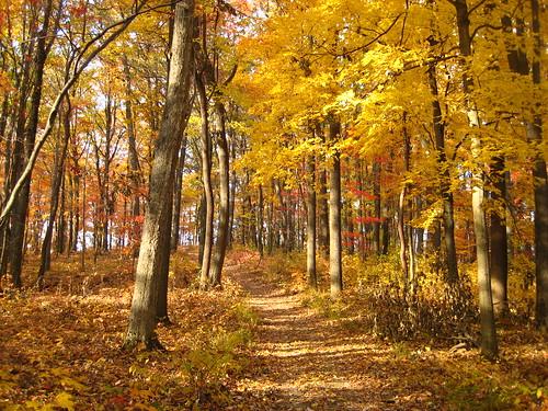 autumn ohio hiking fallcolors parks hockinghills clearcreek