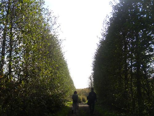 Through an orchard