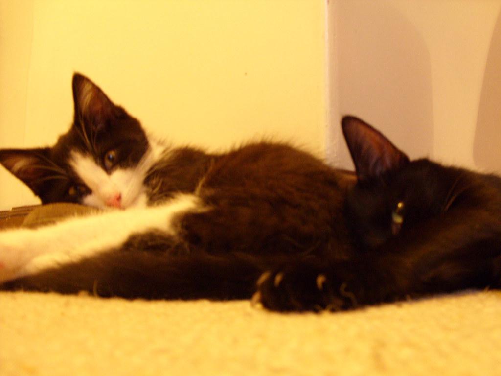 Purina Indoor Cat Food Vomiting