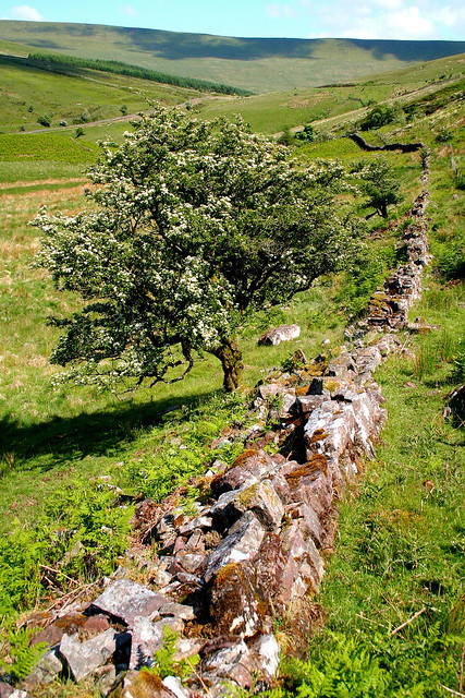 An Old Wall and a Tree