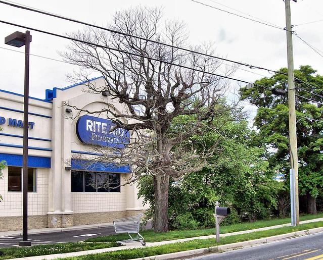 Rite Aid Tree Flickr Photo Sharing