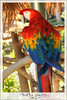 Natalia Robba Photography = San Diego Parrot Chilling