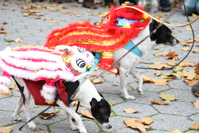 Chinese Dragon Dogs