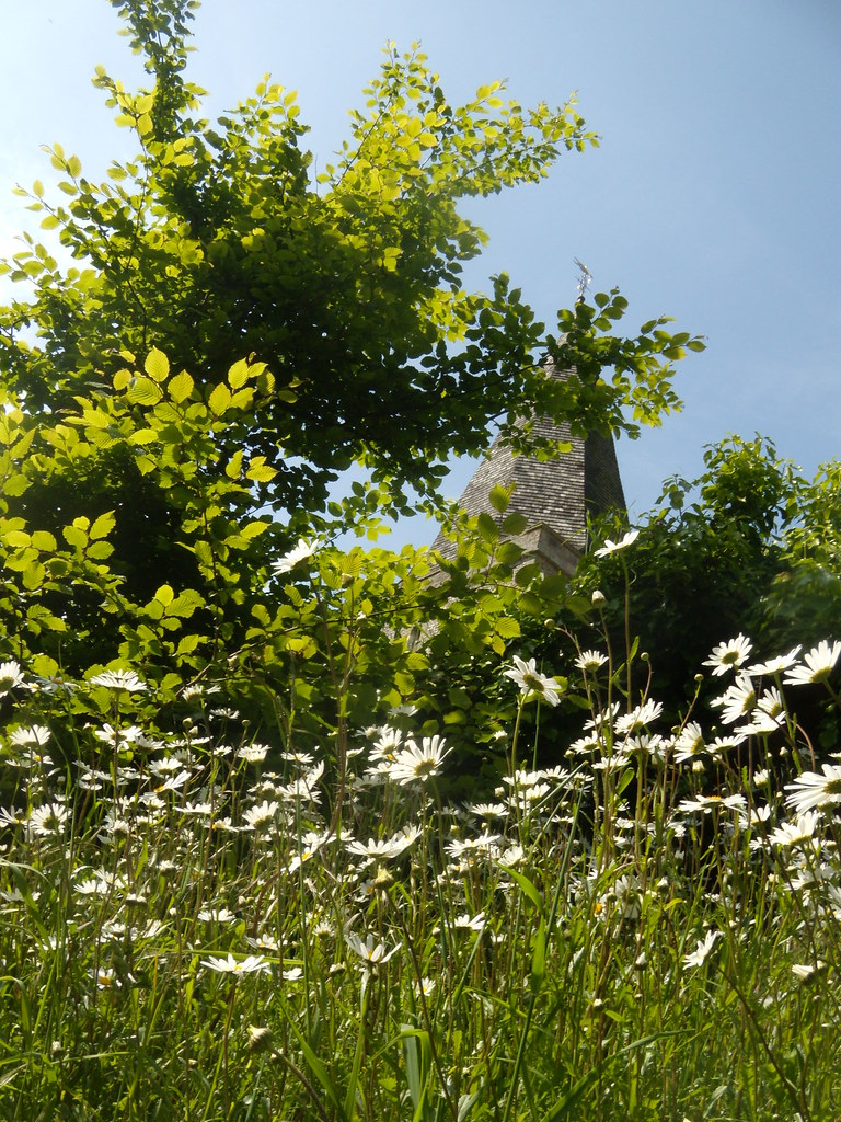 Alfriston church with ox-eye daisies Glynde to Seaford