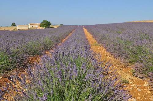 Plateau de Valensole for all my friends