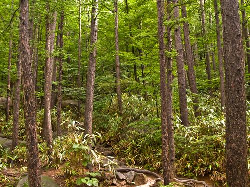 trees green landscape nationalpark hiking korea cypress 2009 jirisannationalpark mtjiri