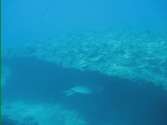 Hawaiian Scuba Diving Video