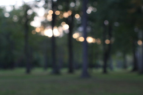 park sunset ny blur aperture focus gargoyle manualfocus 50mmf14 olean supermulticoatedtakumar canon40d