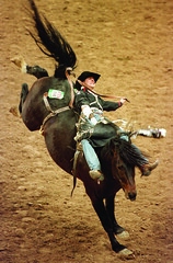 animal sports, rodeo, equestrian sport, sports, person, cowboy,