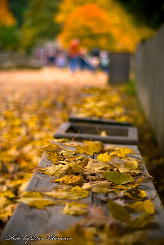 fall leaves bench ma nikon 50mmf18 d80 flickraward oldesturbridgevillage placesyouvisit