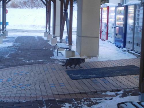 なんやかんやでタダで温泉に入る なぜかネコの写真しかなかった