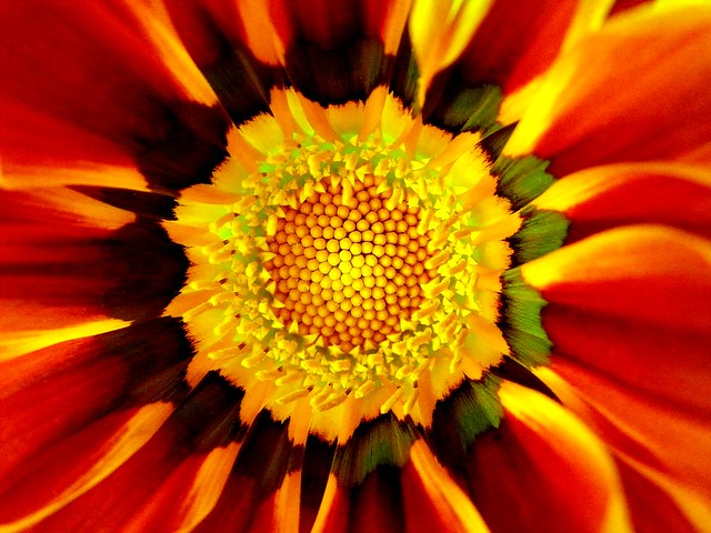 Flower Mandala ( Magnificence of Nature)