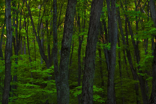 trees ontario canada green forest maple saturated stjosephisland nikond40 tamron18270mm