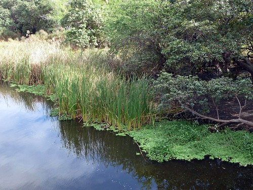 Pond of Saint-Paul