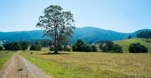 australia kundibakh wanda©amos rural trees bush