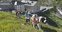 Cestování po Švýcarsku se psem