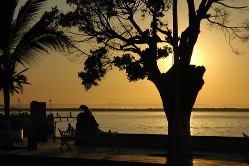 Silhouette tree, glowing sunset, bench, dolphin sculpture, Malecon (boardwalk), La Paz, Baja, Mexico by Wonderlane