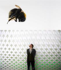 Bumblebee and me