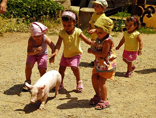 Human children and pig child