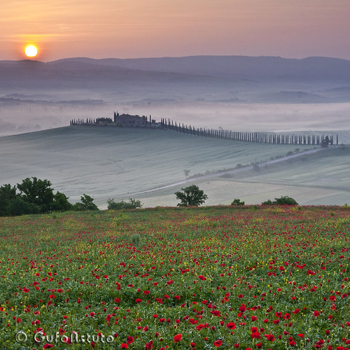 Tuscany Poppy Sunrise