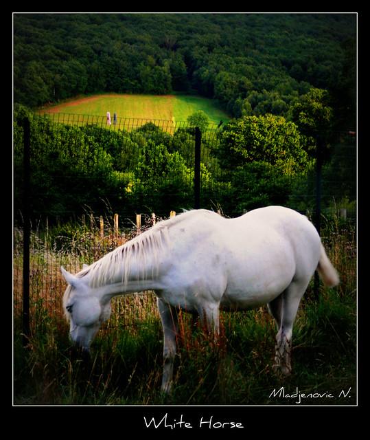 606 White Horse