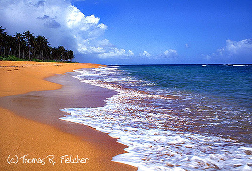 Puerto Rico, Palm trees, shoreline along Piñones