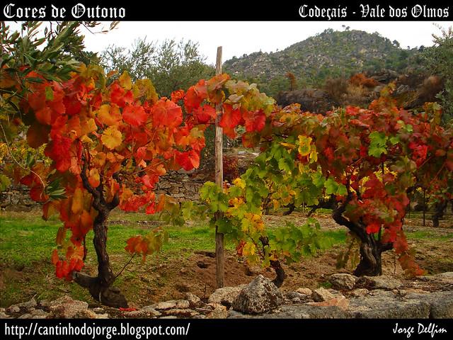 Codeçais - Vale dos Olmos - Cores  de Outono - 5