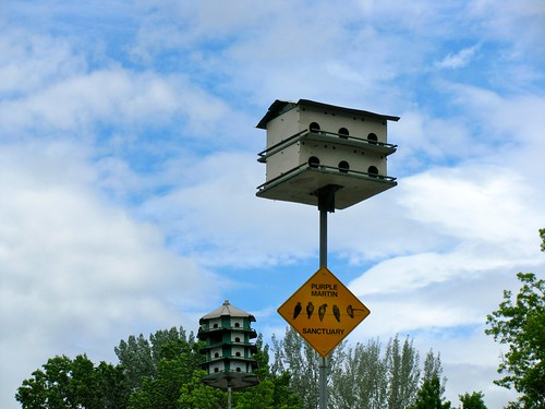 Apartment Bird Houses for Purple Martins in Hightstown, New Jersey by Bogdan Migulski