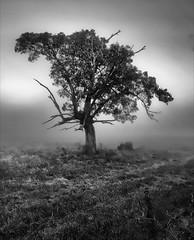 tree bw 078