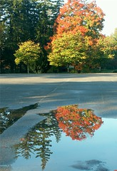 Parking Lot Reflection