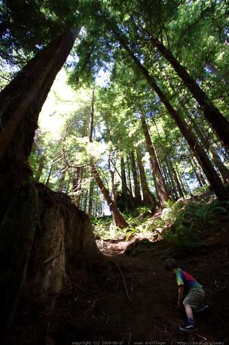 walking in the humboldt redwoods    MG 1161