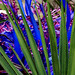 Blue Glass, Green Agave