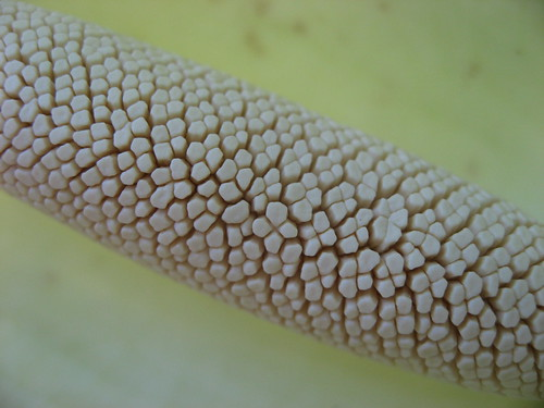 Arum flower (Spadix) closeup