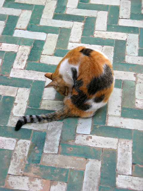 Cat at Bahia palace, Marrakech