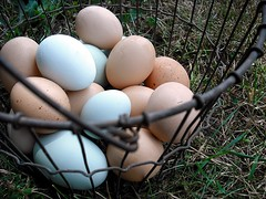 farm fresh eggs in basket