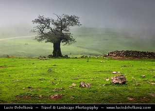 Oman - Misty Greenness of Salalah Mountains