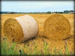 prairie, agriculture, farm, straw, hay, field, grass, plant, harvest, pasture, rural area, grassland,