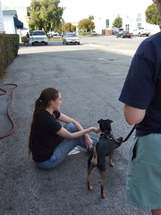 3868158958 f6280cf79f m Various Dog Training Methods