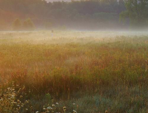 ohio cleveland morningmist kirtland holdenarboretum bluebirdhouse bicknellmeadow