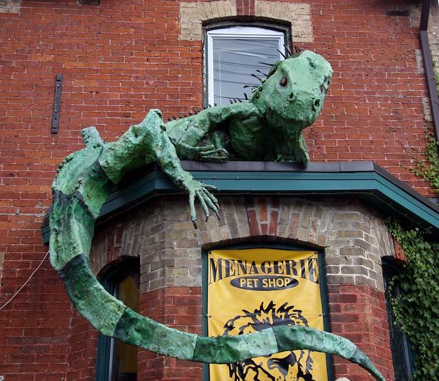 Pet Shop Lizard Flickr Photo Sharing