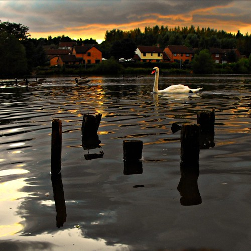uk houses sunset england geese swan shropshire telford 2009 picnik midlands gully priorslee rottingstumps gullyahmed gullydj