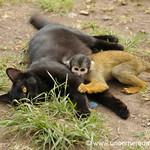 Cat and Monkey Wrestling - Day 3 of Salkantay Trek, Peru