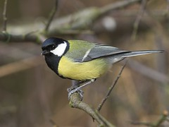 finch(0.0), chickadee(0.0), green jay(0.0), emberizidae(0.0), brambling(0.0), animal(1.0), perching bird(1.0), branch(1.0), nature(1.0), fauna(1.0), close-up(1.0), beak(1.0), bird(1.0), wildlife(1.0),